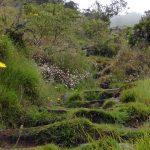 Réunion #4 | Au cœur du Cirque de Mafate, randonnée de 2 jours