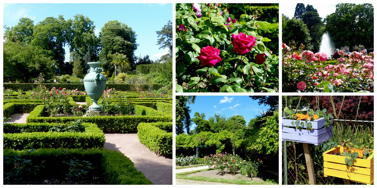 Le jardin des plantes de rouen dans tous ses tats for Jardins de plantes