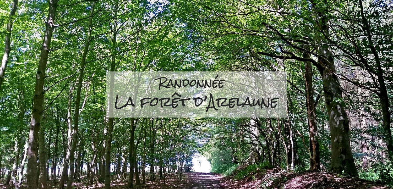 For t d 39 arelaune randonn e dans la campagne normande for Dans la foret