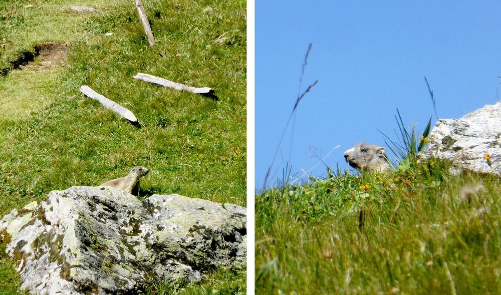rando-lac-plagne-marmotte