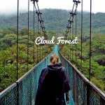 Capture #2 | Plonger dans la Cloud Forest au Costa Rica