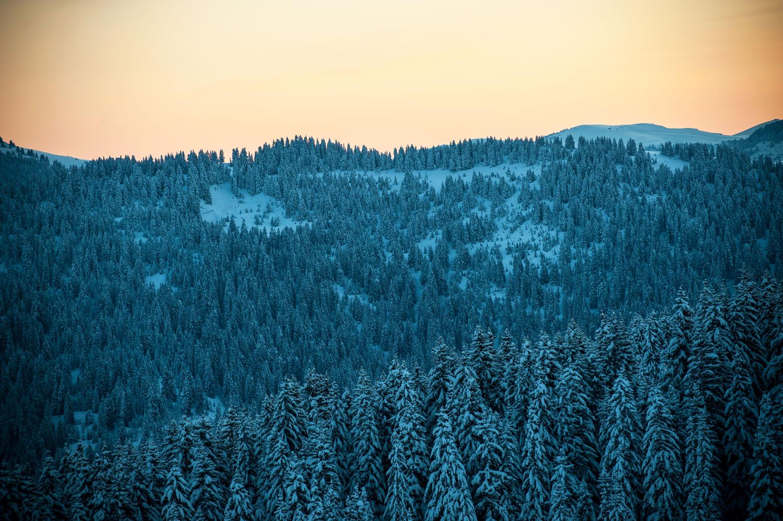 La montagne en hiver - Neige à Avoriaz en Savoie | Sapins enneigés par Pierre