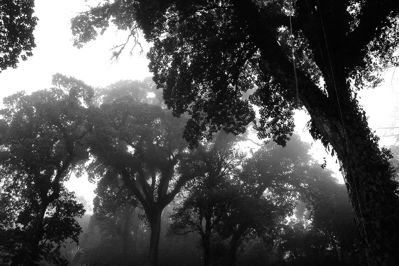 Evasion en images | La Cloud Forest au Costa Rica | La brume dans les arbres