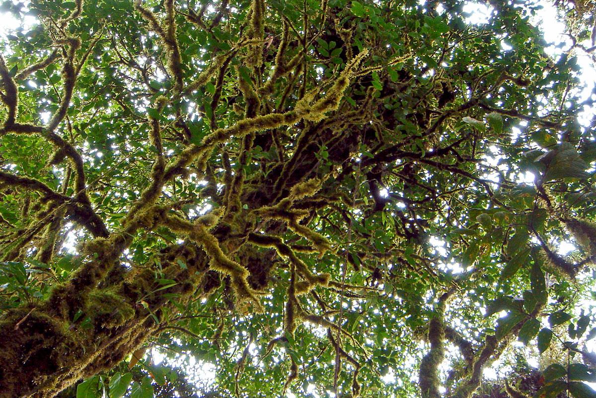 Evasion en images | La Cloud Forest au Costa Rica | La végétation luxuriante de la forêt de nuage