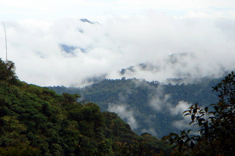 Evasion en images | La Cloud Forest au Costa Rica | La réserve de Sante Helena au Monteverde
