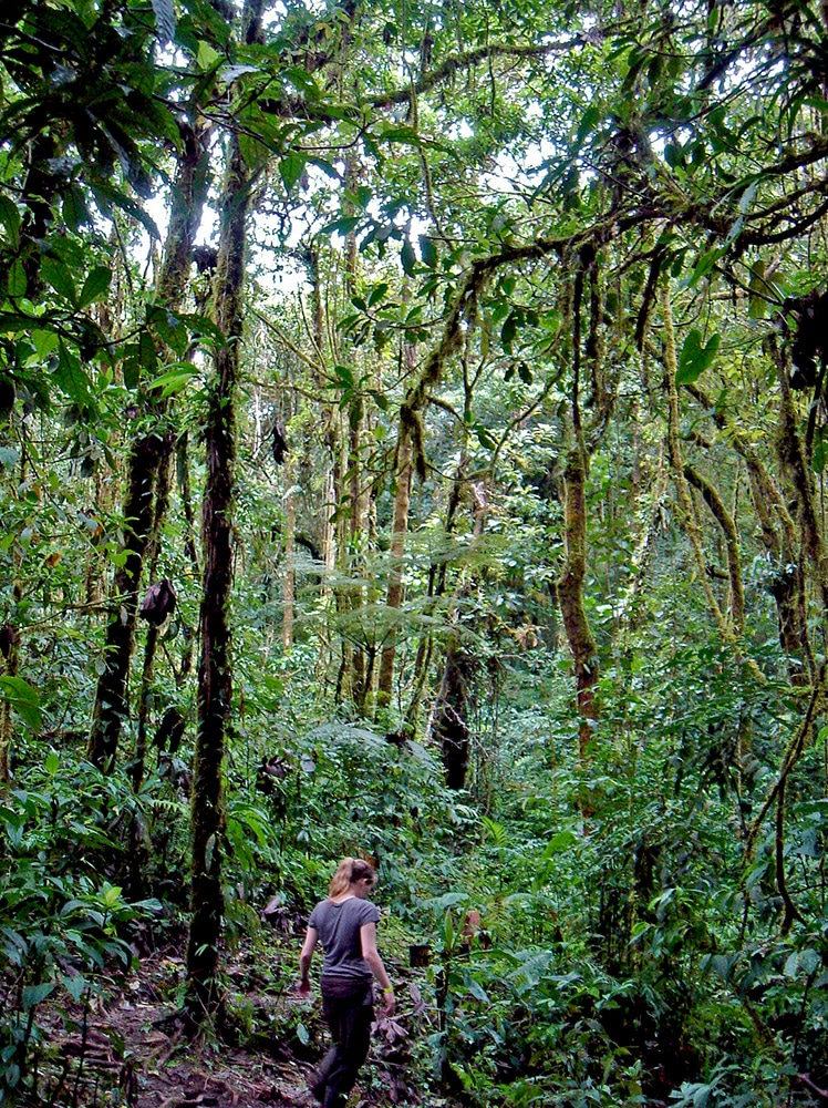 Evasion en images | La Cloud Forest au Costa Rica | Marcher dans la jungle, loin de la civilisation